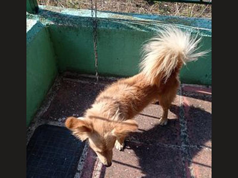 Βρέθηκε το σκυλάκι της φωτογραφίας