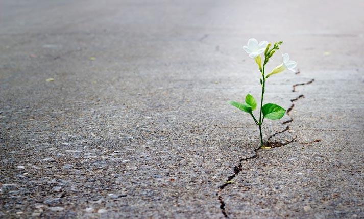 Απολογισμός οικ.ενισχύσεων σεισμού 3/3/2021 Πλατανούλια, Αργυροπούλι, Δένδρα, Αγ.Σοφιά, Βρυότοπος και Δελέρια